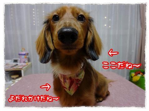 2012_12_30_3.jpg