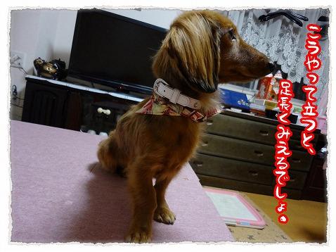 2012_12_30_4.jpg