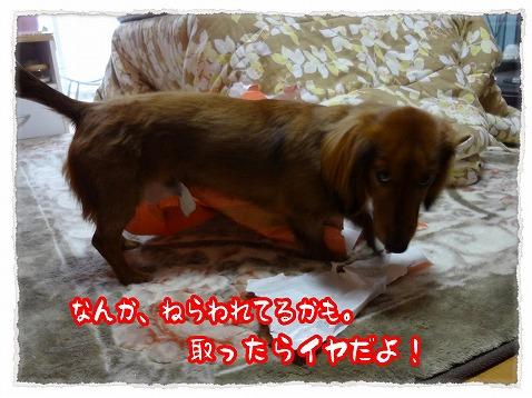 2012_12_31_2.jpg