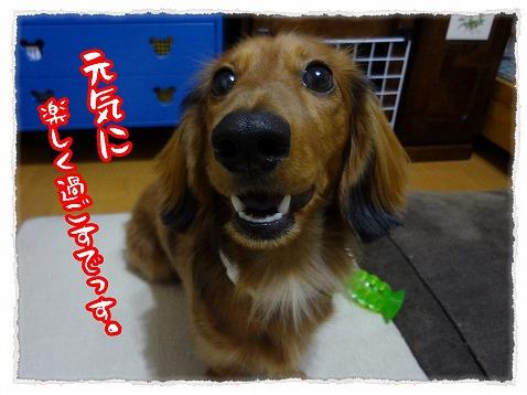 2012_12_31_3.jpg