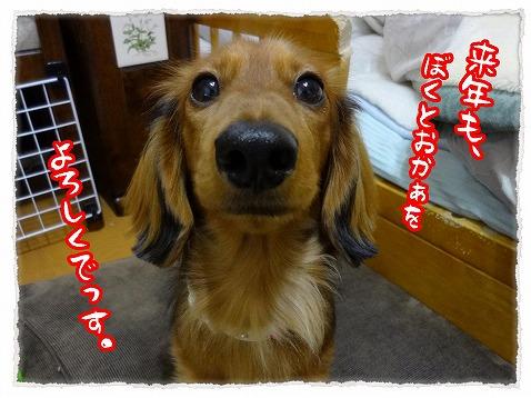 2012_12_31_5.jpg
