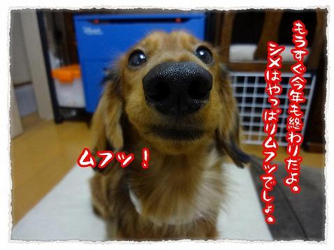 2012_12_31_7.jpg