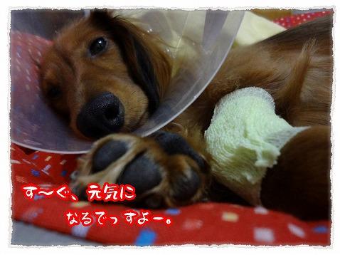 2012_12_3_4.jpg