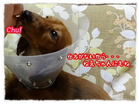 2012_12_4_3.jpg