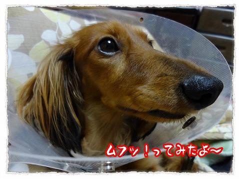 2012_12_4_5.jpg