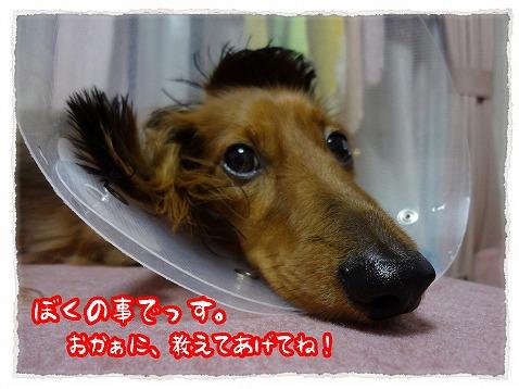 2012_12_5_2.jpg