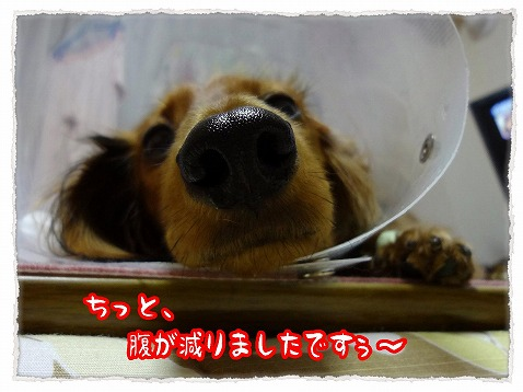 2012_12_5_3.jpg