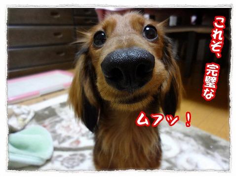 2012_12_7_3.jpg