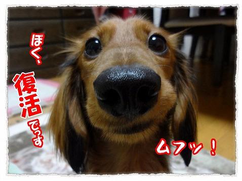 2012_12_7_4.jpg