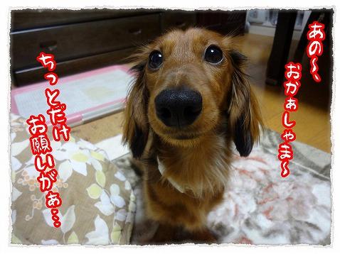 2012_12_8_1.jpg