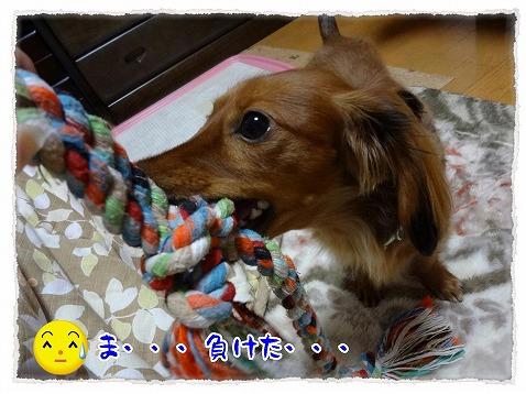 2012_12_8_3.jpg