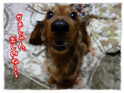 2012_12_8_4.jpg
