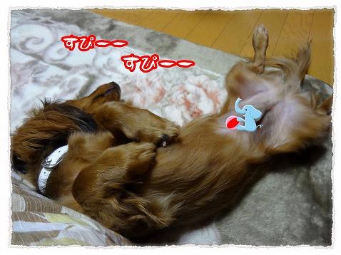 2012_12_8_5.jpg