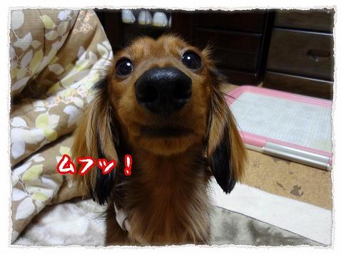 2012_12_8_6.jpg