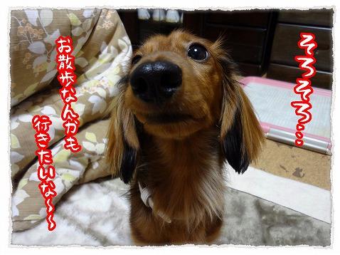 2012_12_9_2.jpg