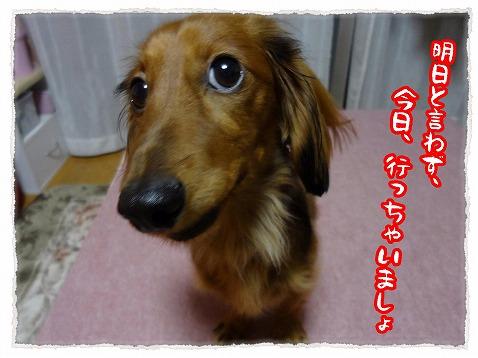 2012_12_9_4.jpg