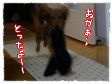 2012_24_2.jpg