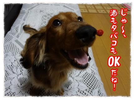 2012_4_26_2_convert_20120426230953.jpg