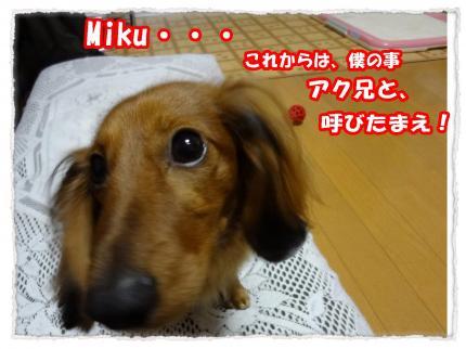 2012_4_26_3_convert_20120426231010.jpg