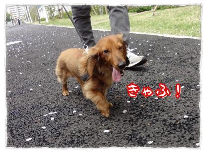 2012_4_27_1_convert_20120427231257.jpg