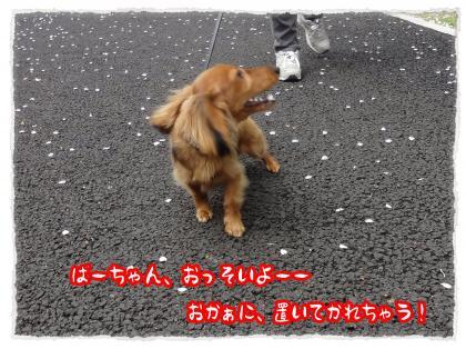 2012_4_27_2_convert_20120427231336.jpg