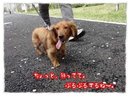 2012_4_27_3_convert_20120427231355.jpg