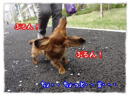 2012_4_27_4_convert_20120427231416.jpg