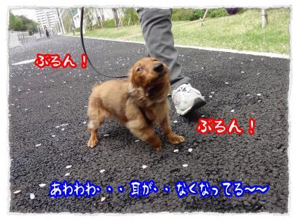 2012_4_27_6_convert_20120427231455.jpg