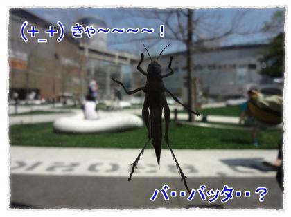 2012_4_28_5_convert_20120428232642.jpg