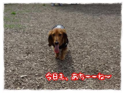 2012_4_29_1_convert_20120429230013.jpg