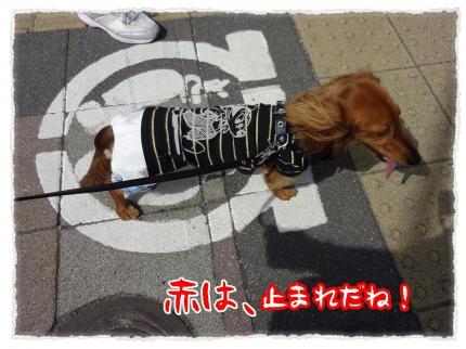 2012_4_29_5_convert_20120429230158.jpg