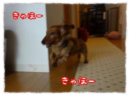 2012_4_30_1_convert_20120430232042.jpg