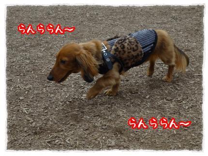 2012_4_30_4_convert_20120430232120.jpg