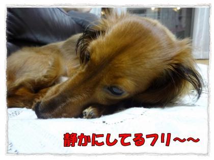 2012_5_10_1_convert_20120510213842.jpg