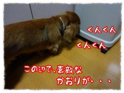 2012_5_10_4_convert_20120510214255.jpg