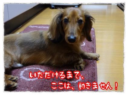 2012_5_10_7_convert_20120510214116.jpg