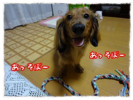 2012_5_16_9_convert_20120516223934.jpg