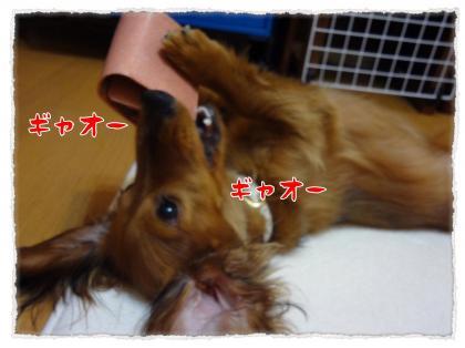 2012_5_17_8_convert_20120517233549.jpg