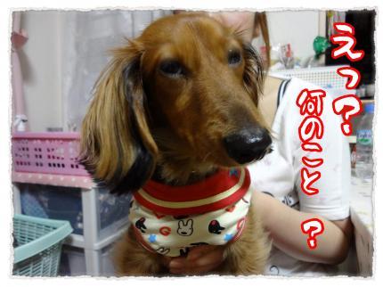 2012_5_18_1_convert_20120518230520.jpg