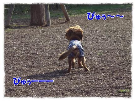 2012_5_21_1_convert_20120521232957.jpg