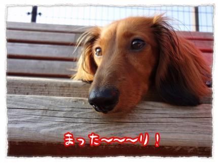 2012_5_21_6_convert_20120521233143.jpg