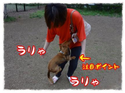 2012_5_23_4_convert_20120523214301.jpg