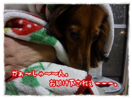 2012_5_24_2_convert_20120524225421.jpg