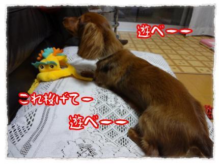 2012_5_24_4_convert_20120524225534.jpg