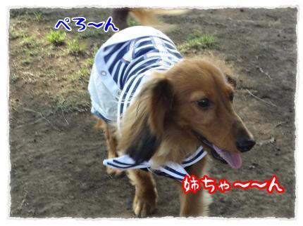 2012_5_27_2_convert_20120527231831.jpg