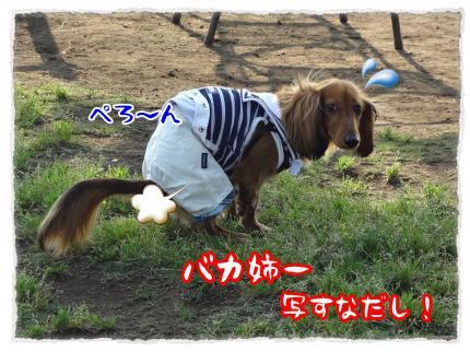 2012_5_27_3_convert_20120527231851.jpg