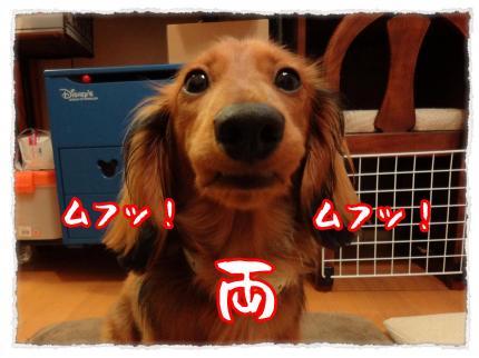 2012_5_28_1_convert_20120528231216.jpg