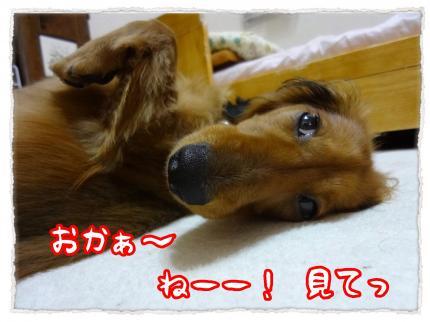 2012_5_29_2_convert_20120529223638.jpg