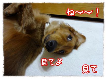2012_5_29_3_convert_20120529223713.jpg