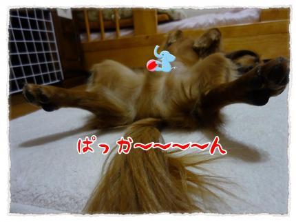 2012_5_29_6_convert_20120529223822.jpg